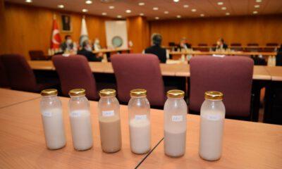 Uludağ Üniversitesi, ceviz suyundan süt ve yoğurt yaptı