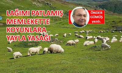 Lağımı patlamış memlekette, koyunlara yayla yasağı