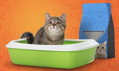 Tekstil sektörü Bursa'dan rekor sayıda 'kedi kumu' satıldı